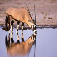 northern namibia safari>8days