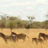 2nights porini big five safari kenya>big game safari kenya