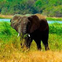 Akagera Safari Rwanda>Rwanda game safari packages>3days