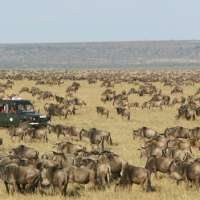 Tanzania migration awesome safari>sanctuary 3 nights