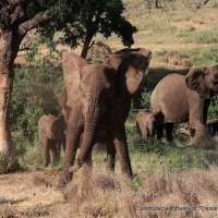 kenya safari~safaris in kenya~mara safari packages kenya-10days