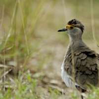 10 days bird watching in Tanzania>Birding tours Tanzania
