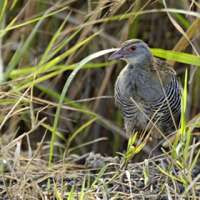 12 days Bird watching in NorthernTanzania>birding tour packages tarangire